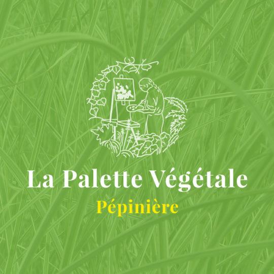 La Palette Végétale - eszett studio